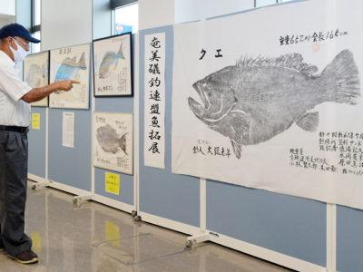 15点展示、「魚拓展」始まる