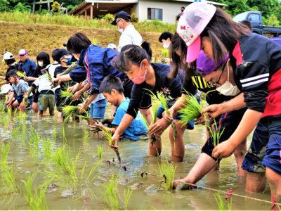 「稲作文化」伝承も期待