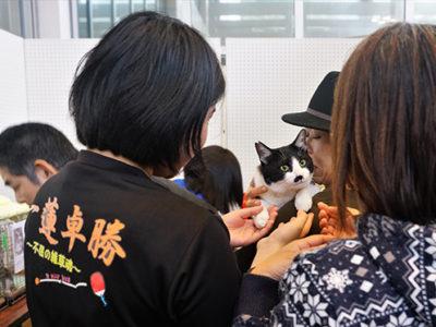猫の譲渡会と写真展