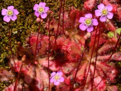 路傍彩る薄紅の小花