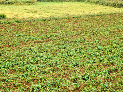 農作物の生育阻害じわり