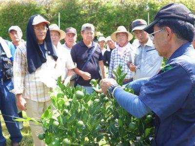 収量増・品質向上へ栽培技術学ぶ