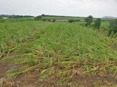 農業被害、県全体で7億円超
