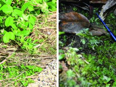 県希少野生動植物に指定