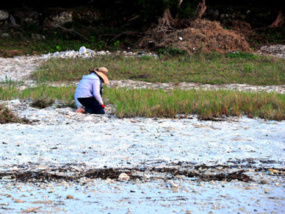 海岸清掃でウミガメ上陸倍増