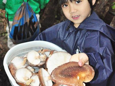 地場産シイタケ収穫体験