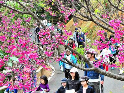 春らんまん桜ウオーキング