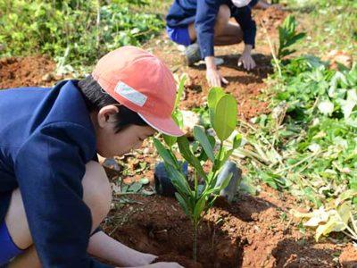 和泊小6年生 児童がフクギ植樹