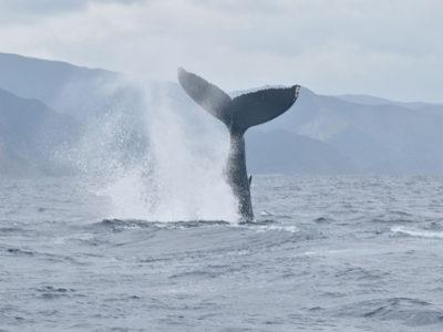 ザトウクジラ見て歓声