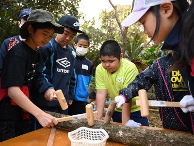 シイタケの駒打ち体験&森林学習