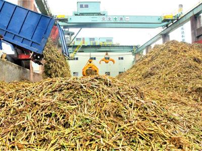 原料搬入、今期製糖を開始