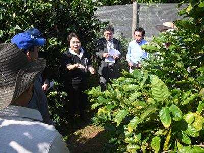 沖永良部のコーヒー農園視察