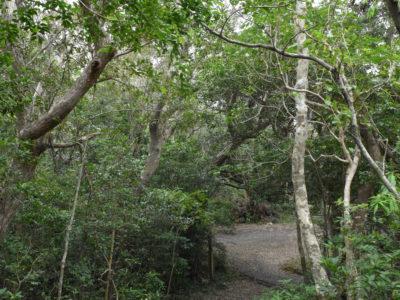 「自然観察の森」1日開園