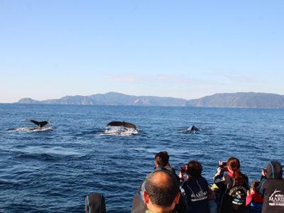 ザトウクジラ来遊シーズン